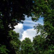 tree-220664